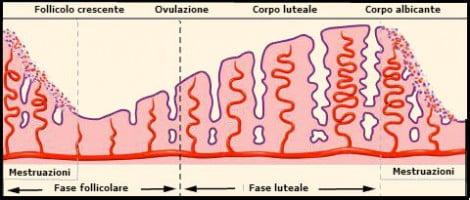 Il ciclo mestruale: cosa succede in ogni sua fase?
