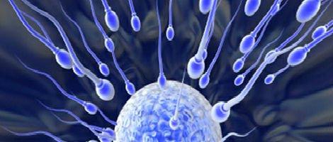 La fertilità