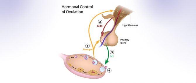 hCG (Gonadotropina Corionica Umana)