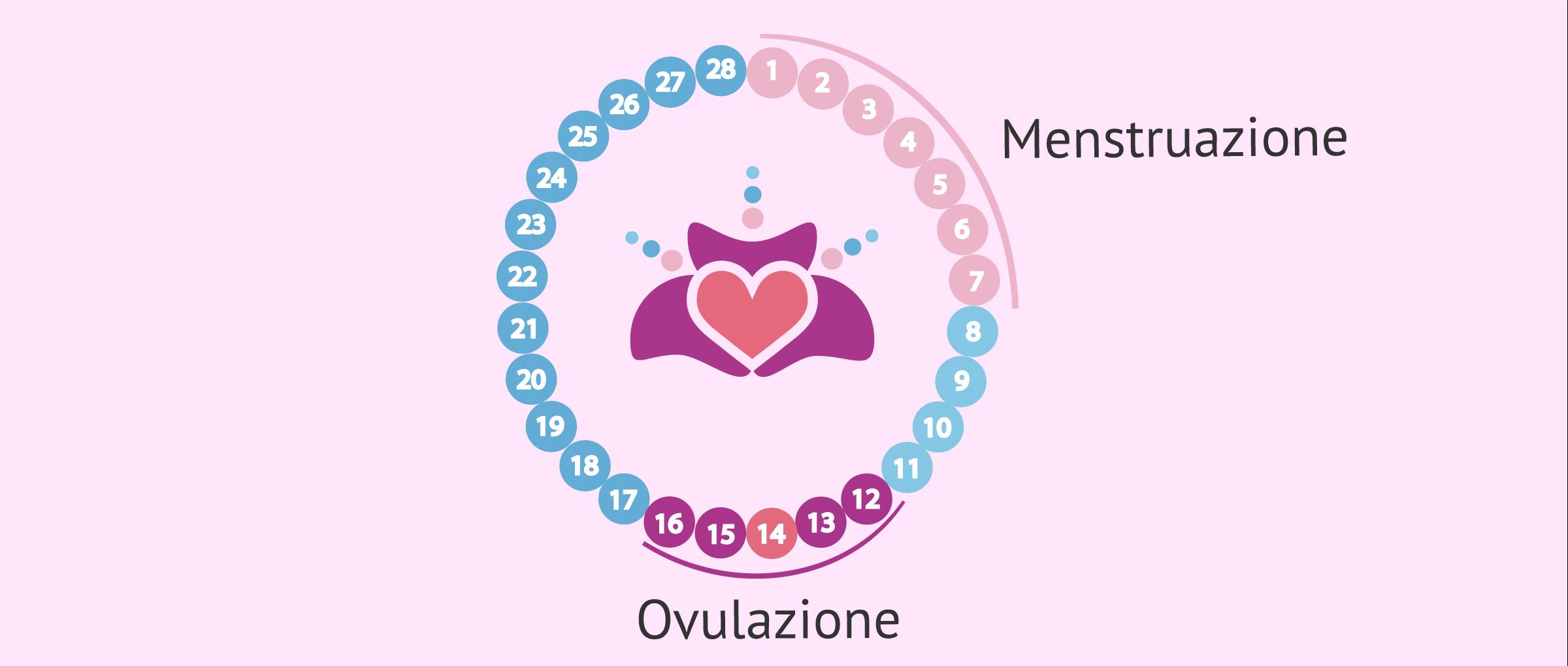 Il primo mese di gravidanza