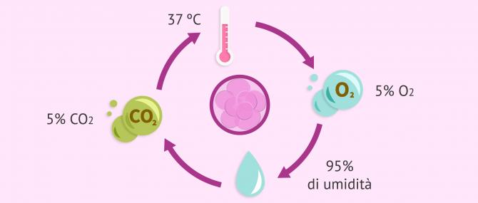 Coltivo di embrioni nel laboratorio di fecondazione 'in vitro' (FIVET)