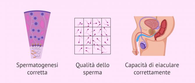 Imagen: Fattori coinvolti nella fertilità maschile