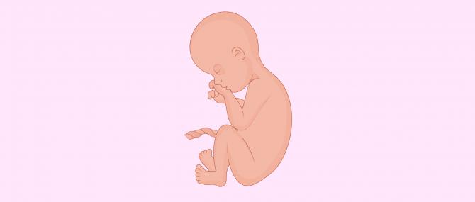 Gravidanza al settimo mese: sintomi e sviluppo del bambino