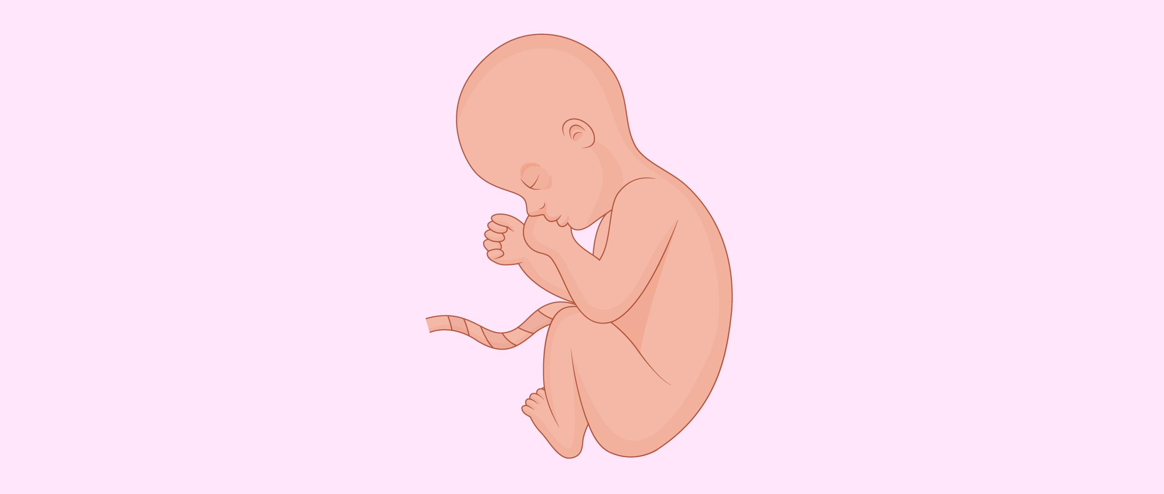 La gravidanza mese per mese