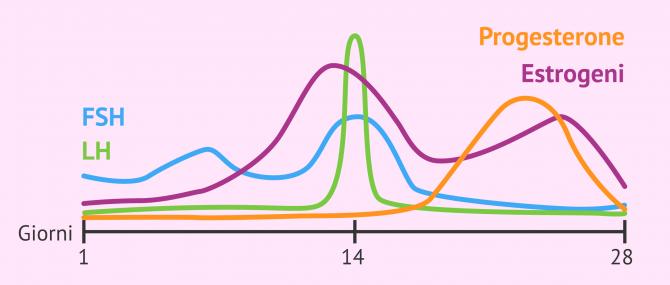 Imagen: Ormoni sessuali nel ciclo mestruale
