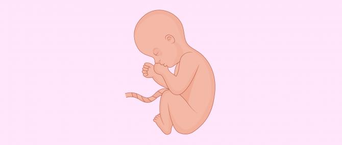 Gravidanza di otto mesi: sintomi e precauzioni