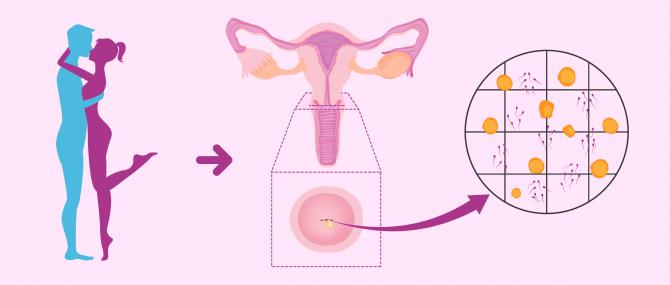 Imagen: Test post-coitale per valutare il fattore cervicale